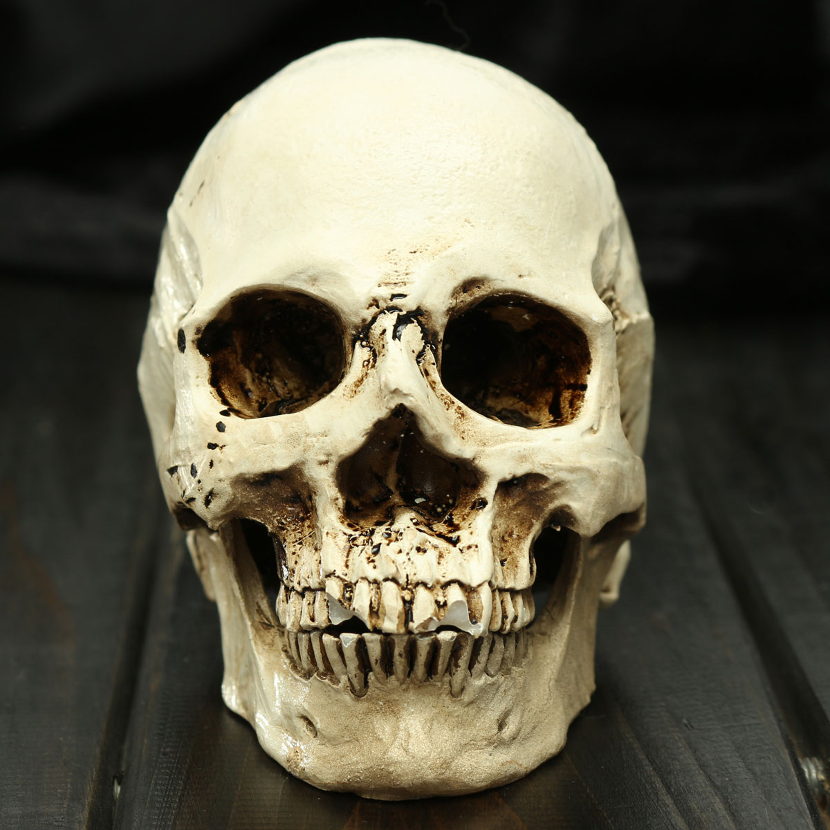 Scary Terrifying Fake Human Skull Death Replica Halloween Decoration